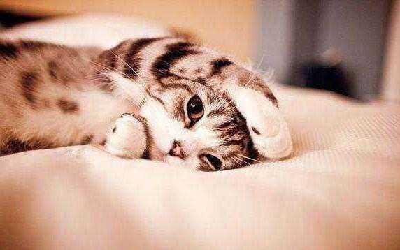 Корм для кошек с чувствительным пищеварением какой лучше – Корм гоу для кошек отзывы ветеринаров и официальный сайт, цена и где купить, состав для животных с чувствительным пищеварением